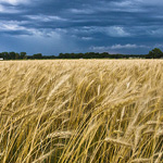 oklahoma-wheat-plains